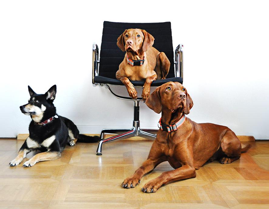 Diskurs Coaching Bürohunde